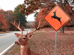 Deer Crossing2