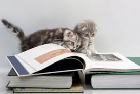 kittens learning