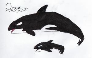 Orca by Ayman