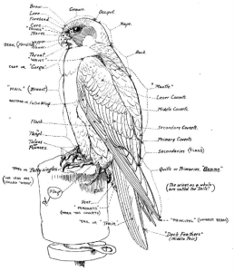 Falconry_sport_of_kings_(1920)