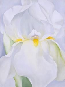 White Iris Okeefe