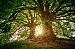 Ombu Trees Argentina