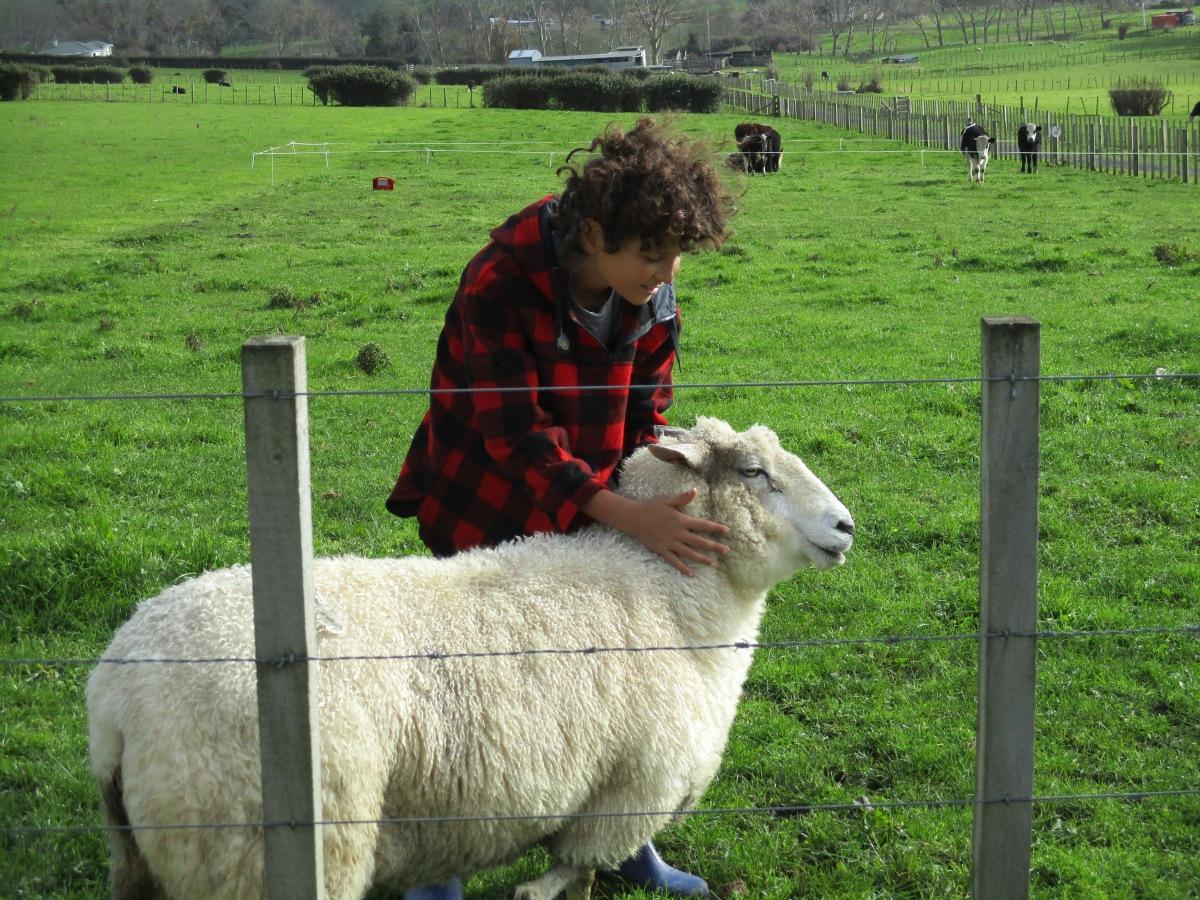 Sheep farm North Island New Zealand