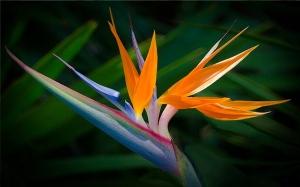 Bird of Paradise Radwa Ashour Tantoura